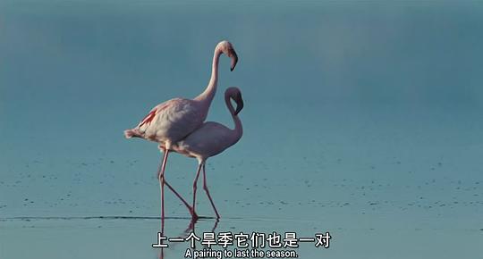 红色翅膀:火烈鸟故事电影百度云下载剧照